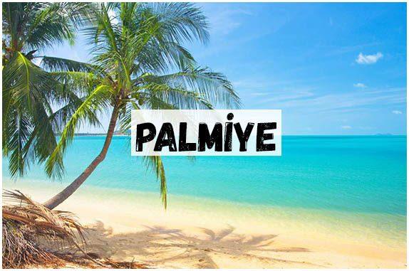 PALMİYE